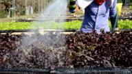 WateringPlants video