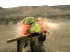 Watermelon explodes - high speed camera video