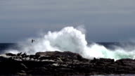 Wave crashes against rock video