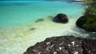 Wave Pattern on the Beach in Summer Season video