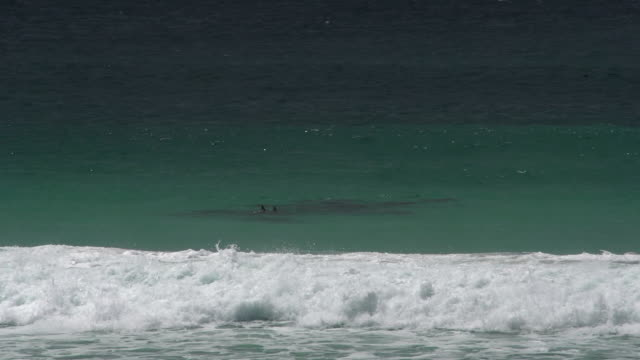 Waves and a group dolphins at Twilight Beach in Great Ocean Drive, Esperance, Western Australia video