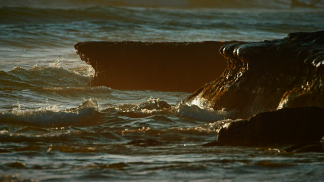 Waves break against a reef wall in the evening light showcasing the intricate beauty of Earth's oceans. video