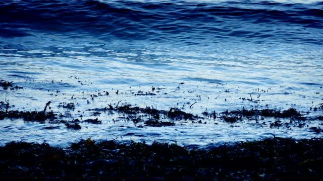 Waves Breaking On Seaweed In The Evening video