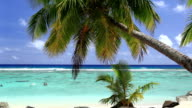 Waves on a tropical beach with palm tree video