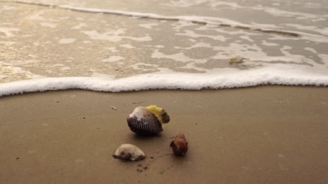 Waves roll over seashells on the beach video