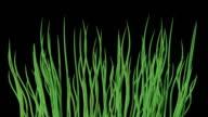 Waving water grass seamless loop video