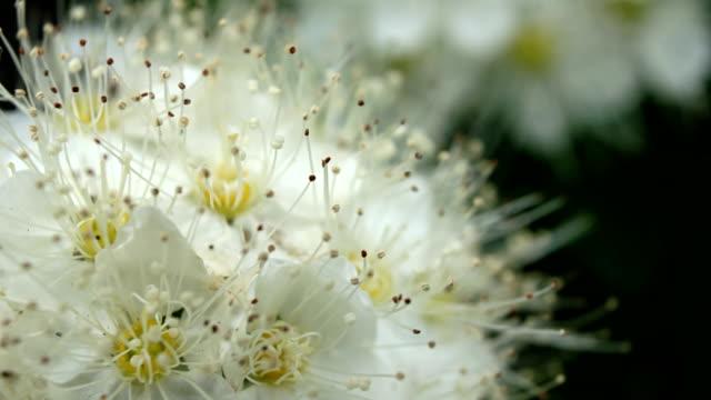 Weak swinging white flowers video