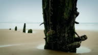 Weathered Shipwreck On Beach video