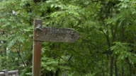 Weathered wooden footpath sign in Scottish woodland video