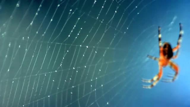 Web and spider video