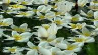 Wedding flowers video