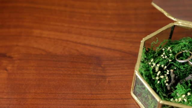 Wedding rings on green moss. video