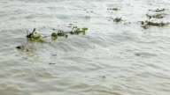 Weed floating in the water. video