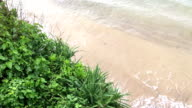 Weligama Beach, Sri Lanka video