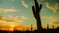 Western Cactus Sunset video