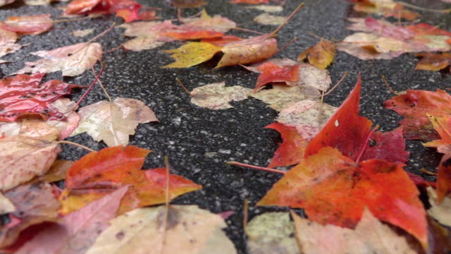 CLOSE UP: Wet colorful fallen tree leaves laying on road on rainy autumn day video