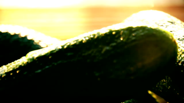 Wet cucumbers on a wooden table on a sunny day. FullHD macro pan shot video