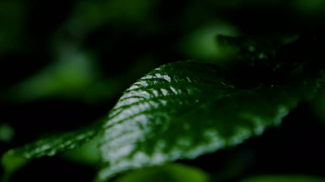Wet Forest Leaves 2 video
