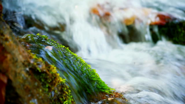 Wet green moss on a stone that lies in the forest river video