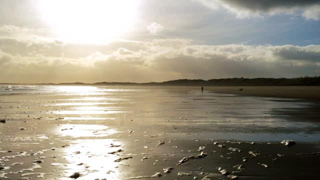 Wet Sand reflects yellow setting sun, dog runs in distance video