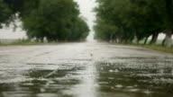 Wet Season video