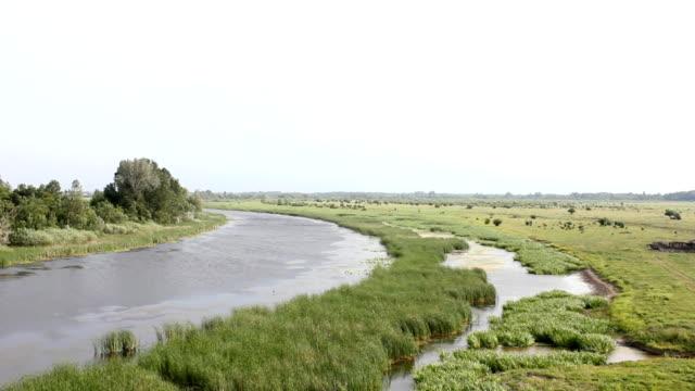 Wetland (HD) video