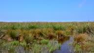 Wetlands in the Kizilirmak delta Black Sea Province of Turkey video