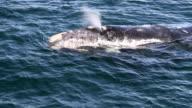 whale breath video