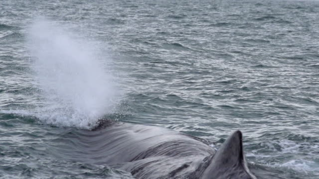 SLOW MOTION: Whale Water Spouting video