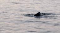 Whales in Antarctica - Antarctic Peninsula - Palmer Archipelago - Global Warming video