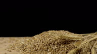 HD DOLLY: Wheat Ears And Grains video
