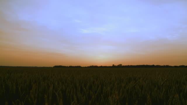 HD: Wheat Field After Sunset video