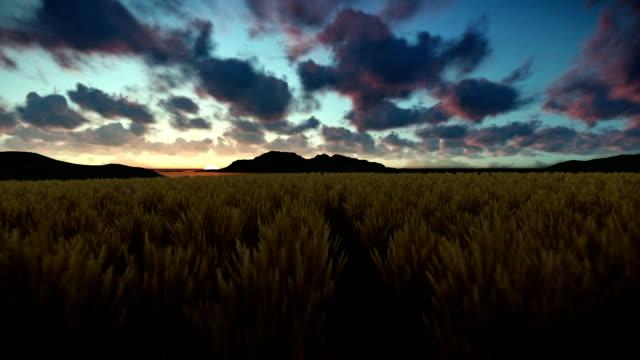 Wheat field against beautiful timelapse sunrise, camera fly video