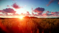 Wheat field against beautiful timelapse sunset video
