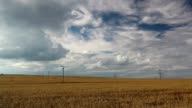 A wheat field almost ready for harvest video