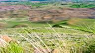 Wheat Field in spring video