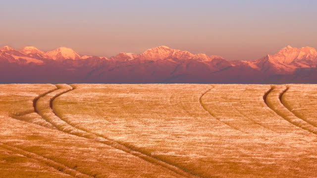 Wheat Field Near Mountains At Sunset video
