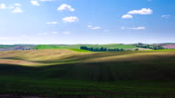 Wheat Field with blue sky in time lapse video