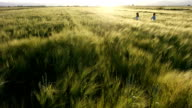 wheat fields and games video