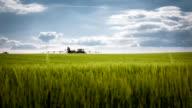 wheat fields at farm video
