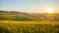 T/L Wheat fields in the Tuscany countryside video