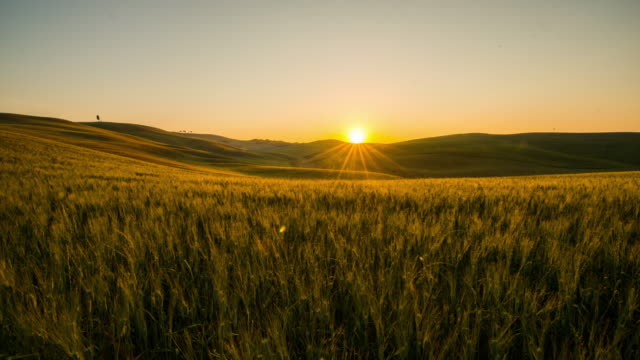 T/L 8K Wheat fields in the Tuscany region video