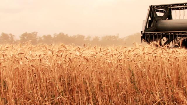 Wheat fields video