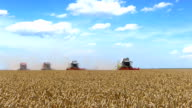 Wheat Harvest video