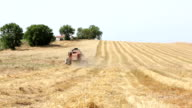 wheat harvest with modern combine harvester, Harvesting equipment, countryside video