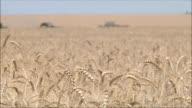 Wheat harvesting shearers video