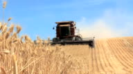Wheat heads and combine video