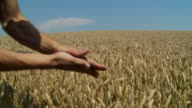 HD: Wheat Production video