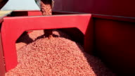 Wheat Sowing video