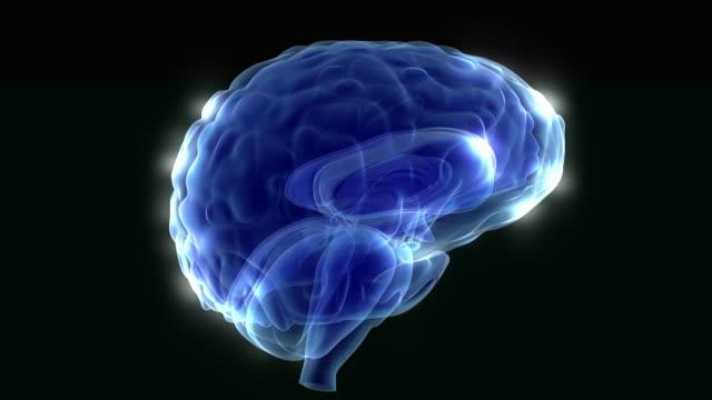 which lights up brain video